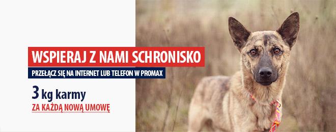PROMAX wspiera ostrowskie schronisko