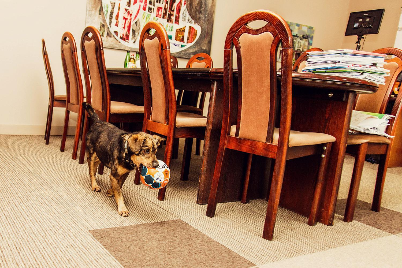 Pies w urzędzie – Ostrów Wielkopolski promuje adopcje